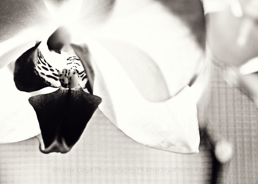 Orchid-in-bw---5x7