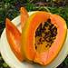 Sweet fresh papaya :). Puerto Viejo, Costa Rica 03MAY12