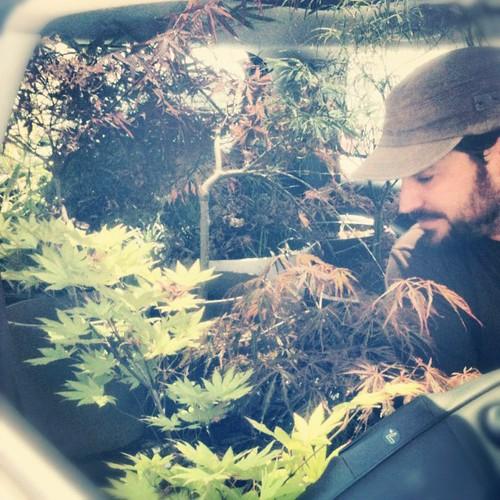 PlantgasmAcer