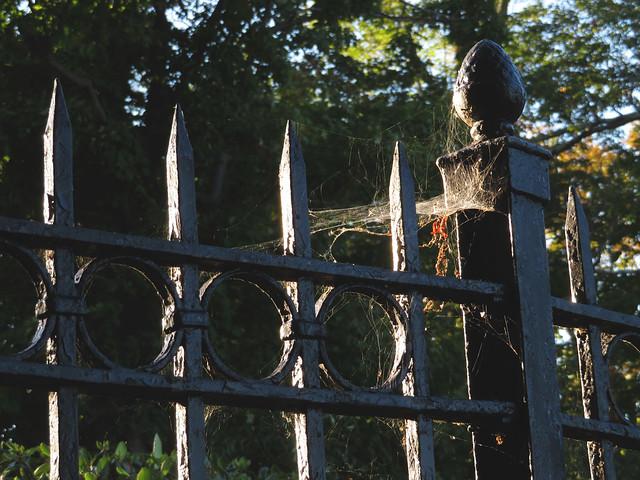 cobwebs at Wakefield cemetery, Wakefield, MA (2016)