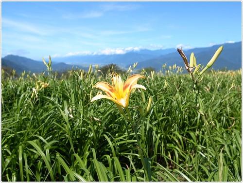 花蓮。六十石山