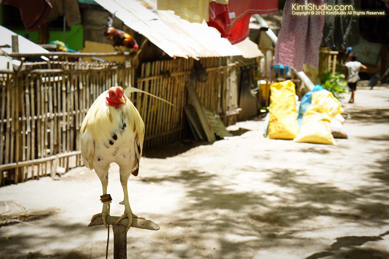 2012.04.19 Philippines-Cebu-Caohagan Island-079