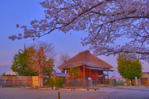 pink sunset japan temple sakura saitama kawagoe さくら nikond3100 leveloindigo