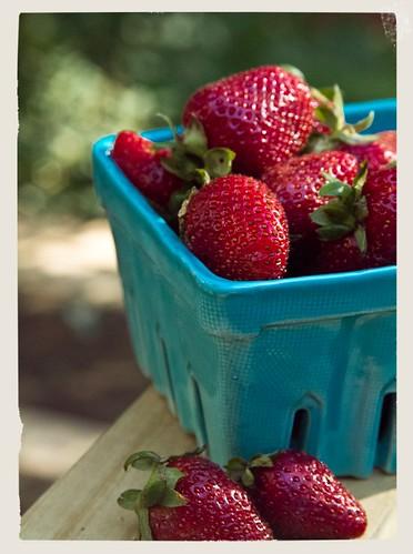 strawberries 02 050512