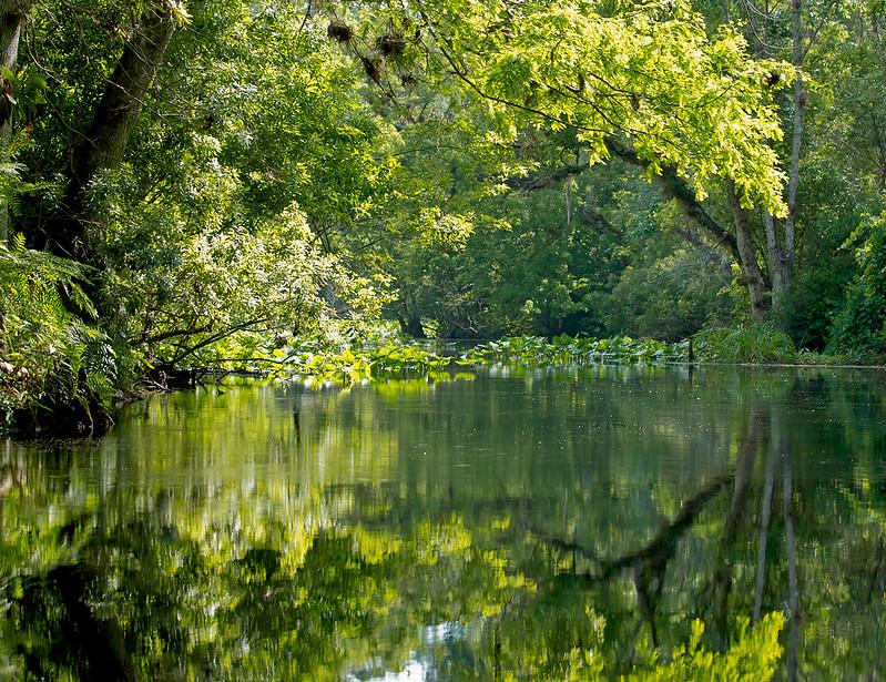 Wekiva River / Rock Springs Run