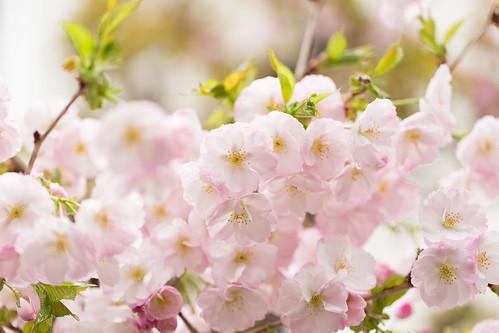 一年で一度きりの春