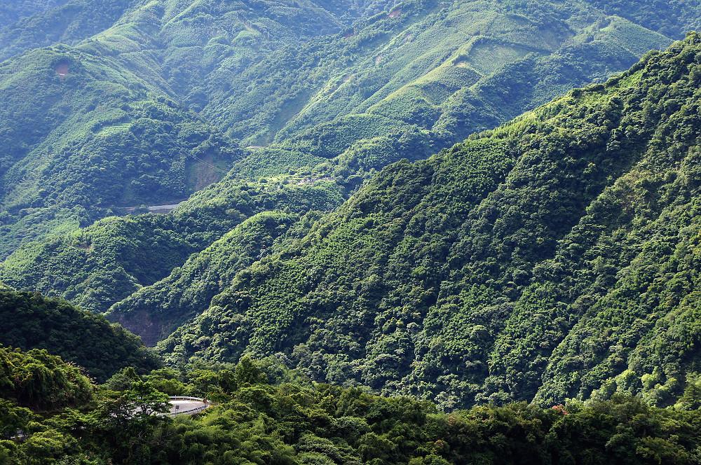 巨木群,與往拉拉山的路上-010