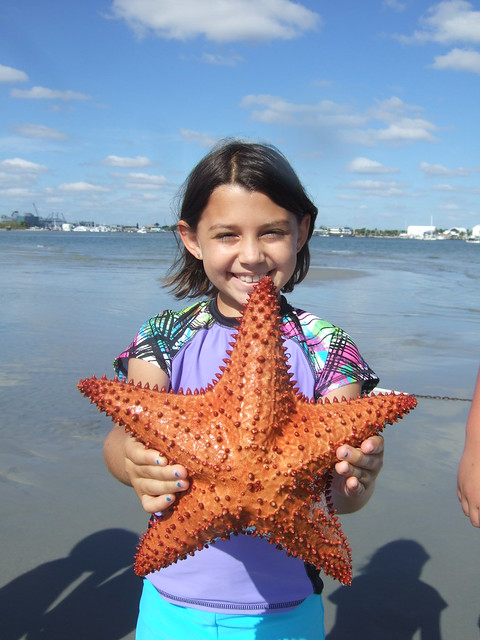 Jules finds a big Cushion Starfish!