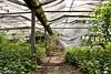 Verlassenes Gewächshaus / Abandoned Greenhouse