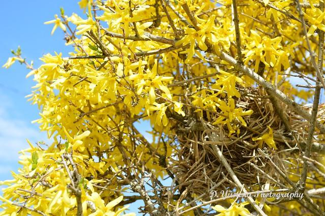 A Hidden Nest