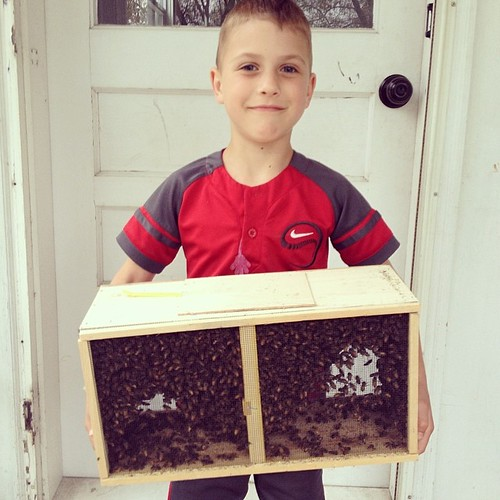 Oliver's holding a colony of honey bees. Like a boss.