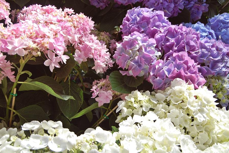 Marché aux fleurs (10)