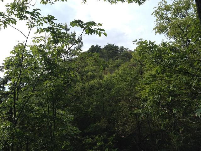 城ヶ峰 登山道から山頂