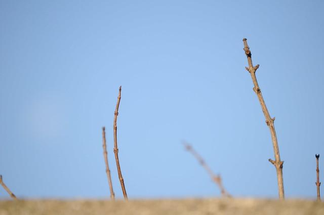 Un trocito de desierto