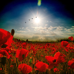 ~ living in a poppy world ~