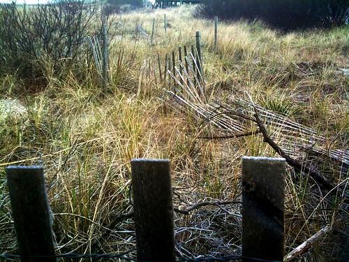 Happy Fence Friday!!