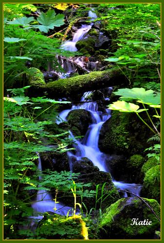 Small stream as we entered Mt. Rainier