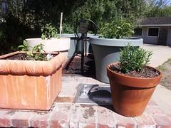 Reveling In My April Easter Garden 4