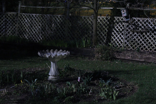 Birdbath by Moonlight