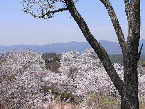 『吉野山の桜』を見てきました@吉野町(2011年春)