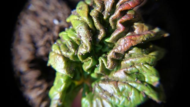 anteketborka.blogspot.com, macrojardin1