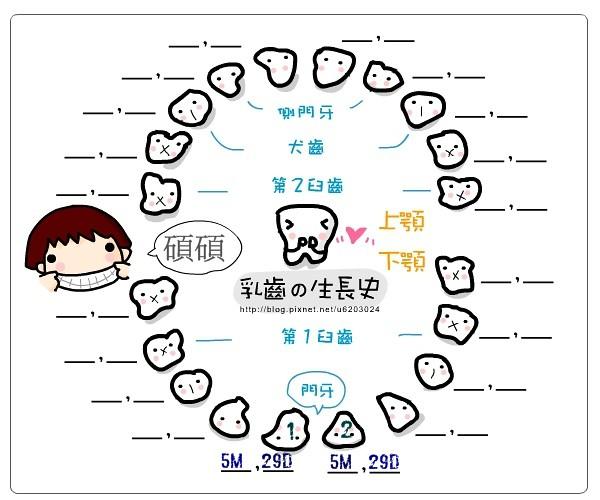 乳牙生長圖1