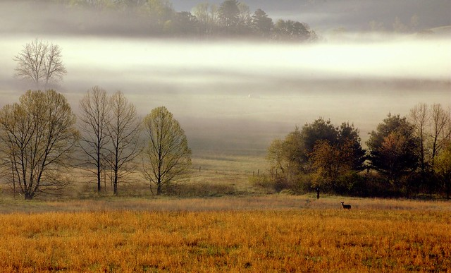 Good Moring from Cades Cove