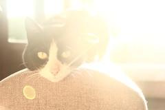 Cat in the sun :o)