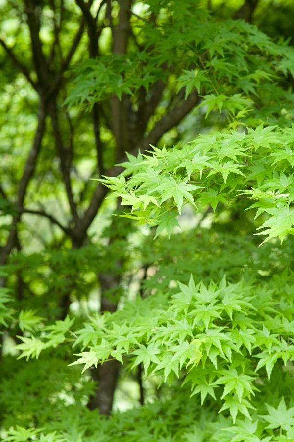 新緑|徳島県三好市
