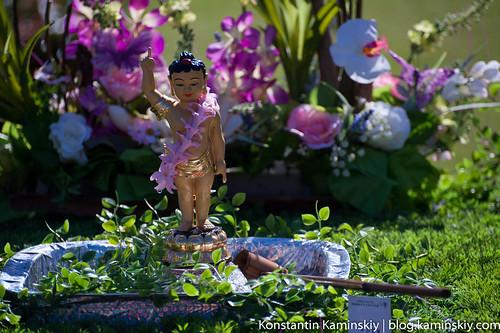 Buddha's Birsday festival-2308