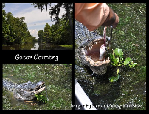 Gator Country for SURE !
