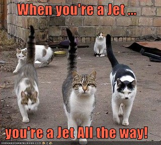 lol when-you're-a-jet kittehs