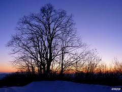 Alberi di un tramonto invernale