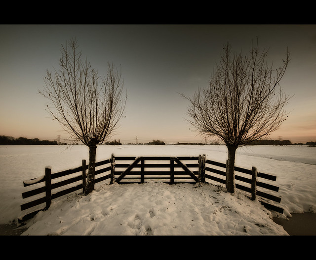 Winter willows at sunset