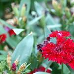 Bild von Botanical Garden in der Nähe von Porto Alegre. flower macro carnation botanicalgarden