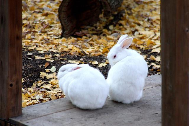 Rabbit - 04