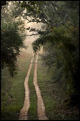 Photo A Day : Keep Walking [100/365]