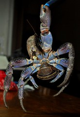 crab, animal, crustacean, invertebrate, macro photography,