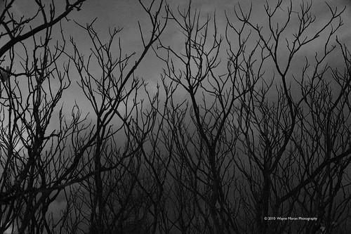 winter nature minnesota landscape eagan lebanonhills lebanonhillsregionalpark lebanonhillspark waynemoran