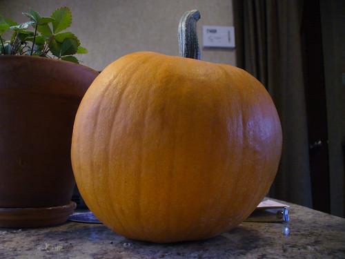 pumpkin colorado september 2010 92010