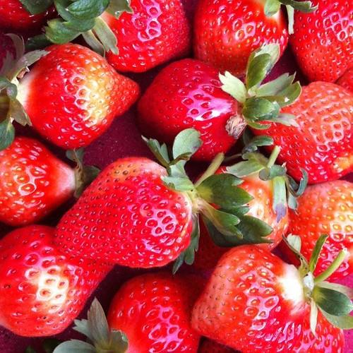 2010 第一口草莓