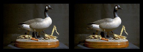 sculpture detail bird art nature stereoscopic stereogram 3d crosseye md gallery brian fine maryland carving goose indoors stereo wallace inside stereopair waterfowl sidebyside depth easton stereoscopy stereographic ewf freeview brianwallace xview stereoimage xeye stereopicture crosssview