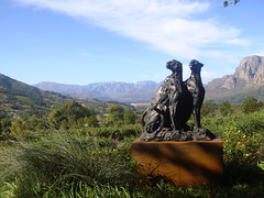 Stellenbosch wine trip