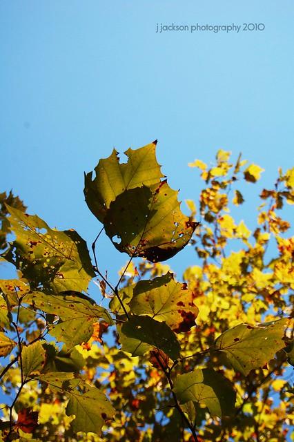 Header of autumn rising