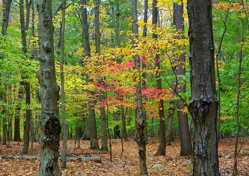 park autumn usa fall october stitch connecticut newengland easthampton hurdstatepark johnjmurphyiii 06424