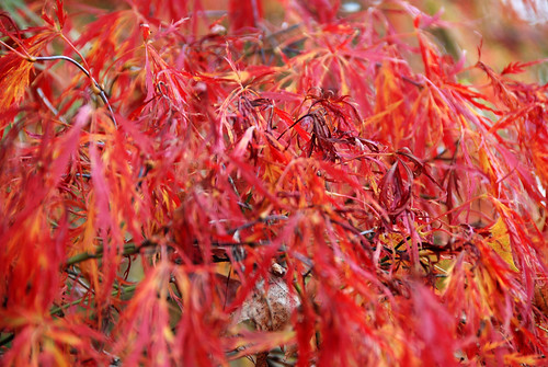 uk autumn red england orange leaves nationaltrust eastsussex potofgold sheffieldparkgarden supershot natureplus saveearth citrit colourartaward esenciadelanaturaleza