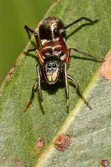 arthropod, scarabs, animal, invertebrate, insect, macro photography, fauna, close-up, pest,