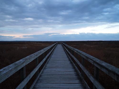 park state florida gainesville boardwalk prairie preserve paynes