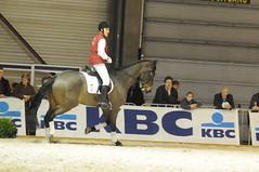 animal sports, equestrianism, english riding, western riding, eventing, dressage, stallion, equestrian sport, sports, recreation, outdoor recreation, horse, jockey,