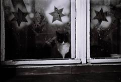 Windows & Cats